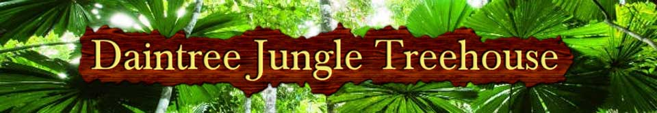 jungle house daintree rainforest accommodation