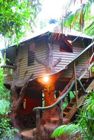 the jungle house daintree accommodation
