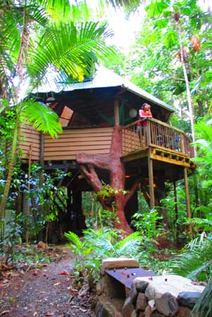 daintree accommodation in the jungle